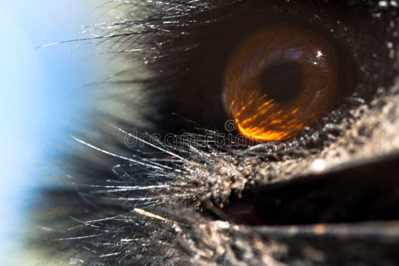 El cuerpo del emú fotografió de cerca, en un fondo verde natural Animal marrón claro, ojos grandes Son omnívoro, pájaros Animales imagenes de archivo