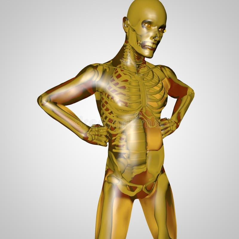 El cuerpo humano stock de ilustración. Ilustración de humano - 30116416