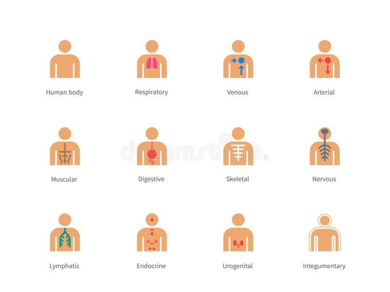 El cuerpo humano y la anatomía colorean iconos en blanco ilustración del vector