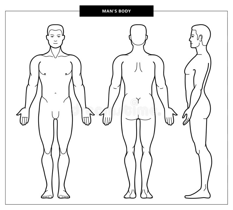 El cuerpo y la anatom?a de los hombres libre illustration