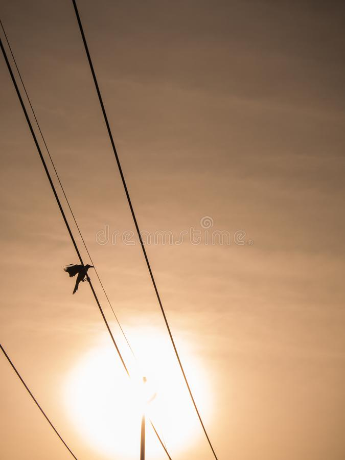 El cuervo agitó la base del poder imagen de archivo libre de regalías