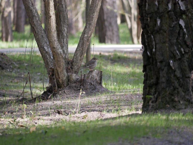 El cuervo come los pescados cogidos en la charca del parque de la ciudad En un d?a de verano soleado Las cazas grises del cuervo  imagen de archivo libre de regalías