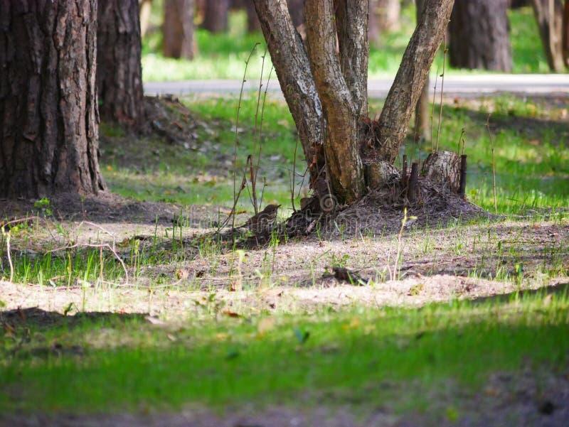 El cuervo come los pescados cogidos en la charca del parque de la ciudad En un d?a de verano soleado Las cazas grises del cuervo  imágenes de archivo libres de regalías