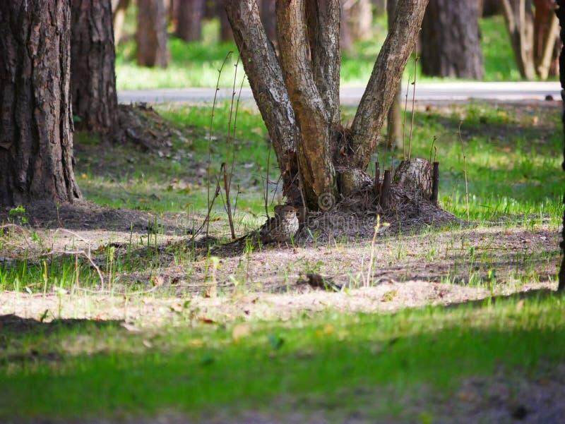 El cuervo come los pescados cogidos en la charca del parque de la ciudad En un d?a de verano soleado Las cazas grises del cuervo  fotografía de archivo libre de regalías