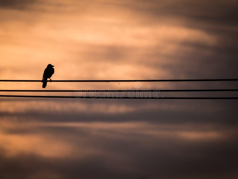 El cuervo encaramado en el alambre imagen de archivo