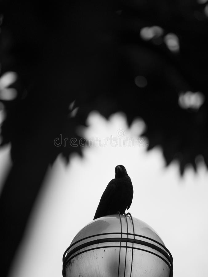 El cuervo encaramado en posts de la lámpara fotografía de archivo libre de regalías
