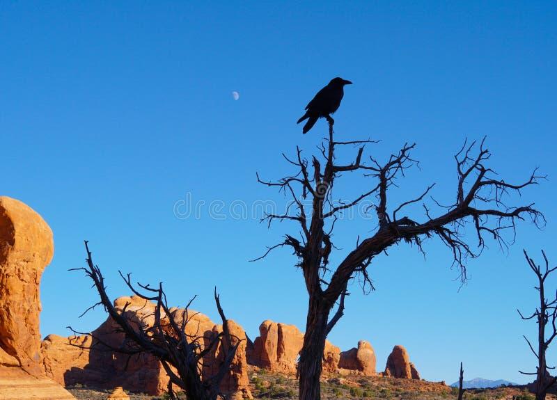 El cuervo, las rocas, y la luna imagenes de archivo
