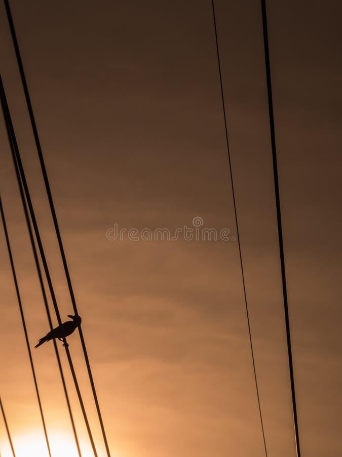 El cuervo que se coloca tranquilo en la base del poder imagen de archivo libre de regalías