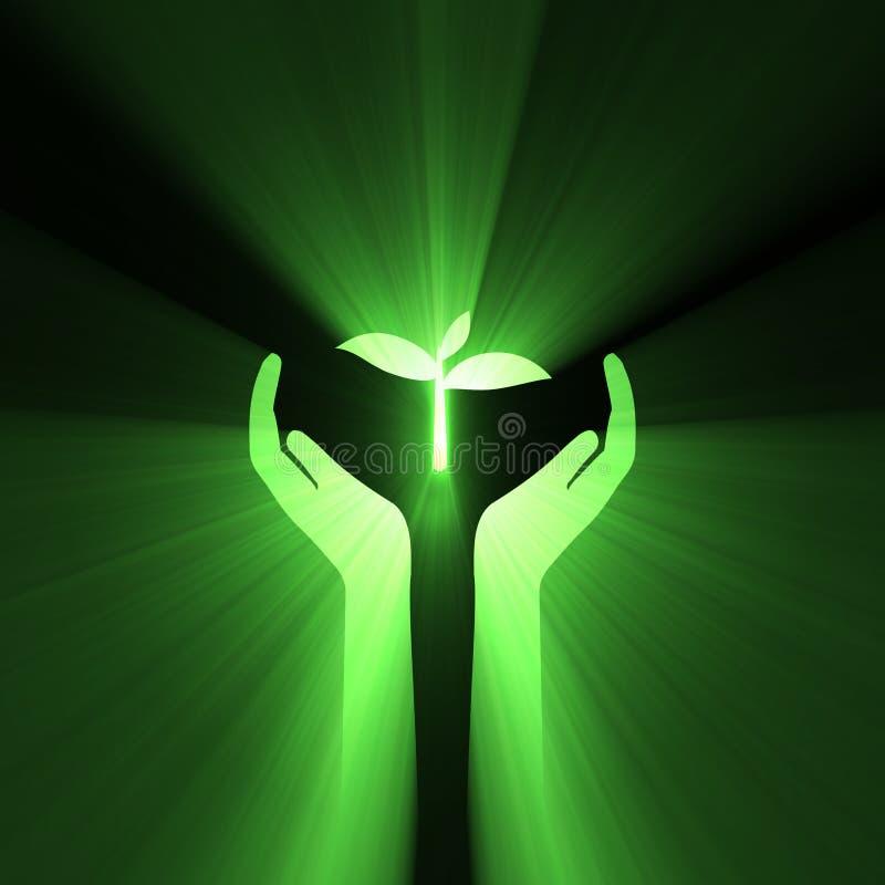 El cuidado de la mano protege la planta verde ilustración del vector