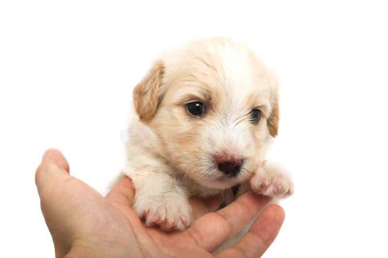 El cuidar para el pequeño perrito imagenes de archivo