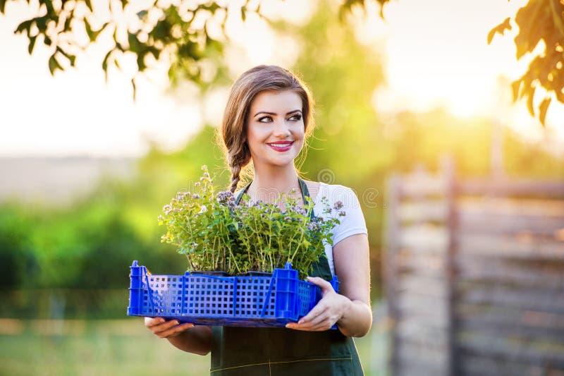 El cultivar un huerto de la mujer joven imagen de archivo
