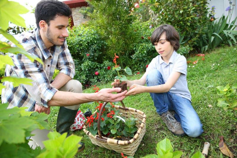 El cultivar un huerto del padre y del hijo imágenes de archivo libres de regalías