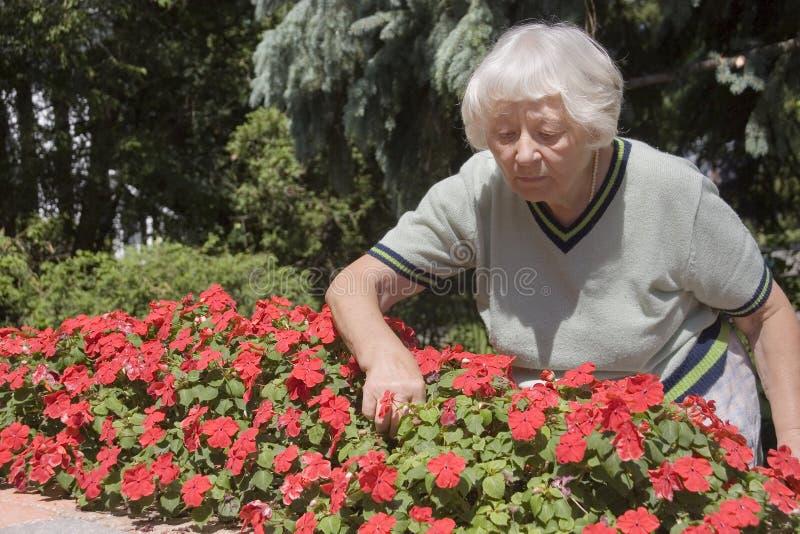 El cultivar un huerto mayor de la mujer imagen de archivo
