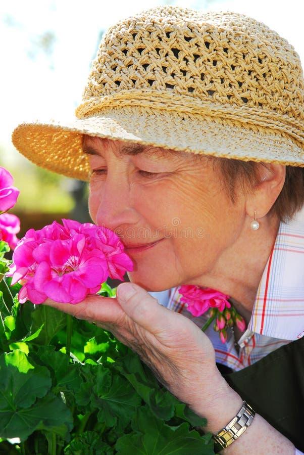 El cultivar un huerto mayor de la mujer foto de archivo libre de regalías