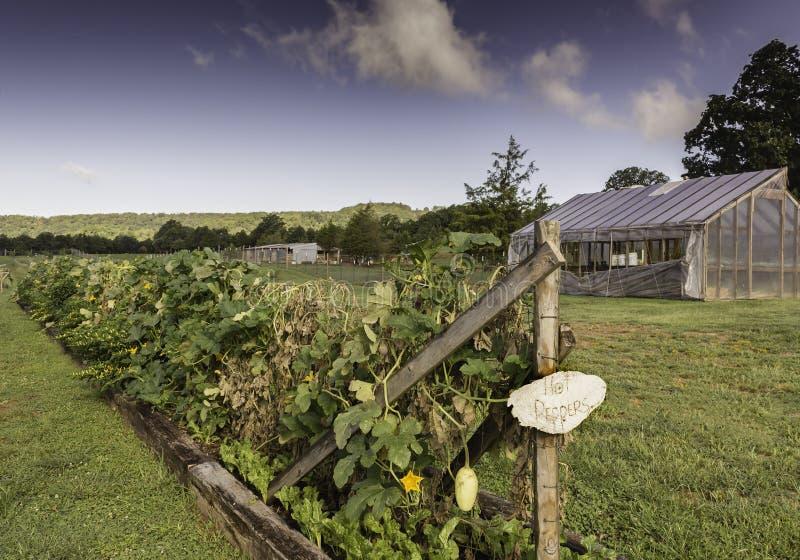 El cultivar un huerto orgánico en Ozark Mountains foto de archivo libre de regalías