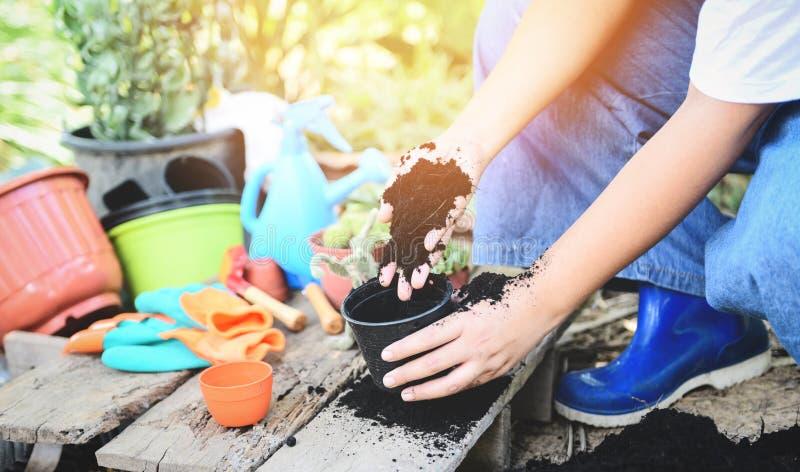El cultivar un huerto plantando una plántula de los almácigos del árbol está creciendo en suelo del pote con la mujer de la mano  imágenes de archivo libres de regalías