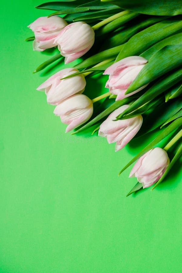 El día de madre feliz, tulipanes rosados en fondo verde Concepto de la tarjeta de felicitación la primavera florece completamente fotografía de archivo libre de regalías