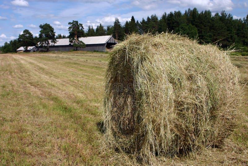 El día de verano soleado del Haymaking, heno rueda en campo recientemente segado imagenes de archivo