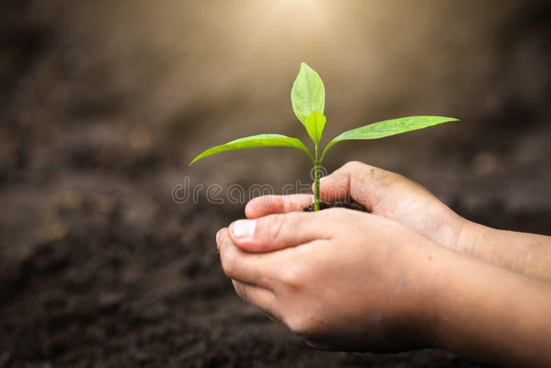 El día del ambiente mundial, árboles que crecen en el suelo en las manos del niño con descenso sobre el ambiente de la luz del so foto de archivo