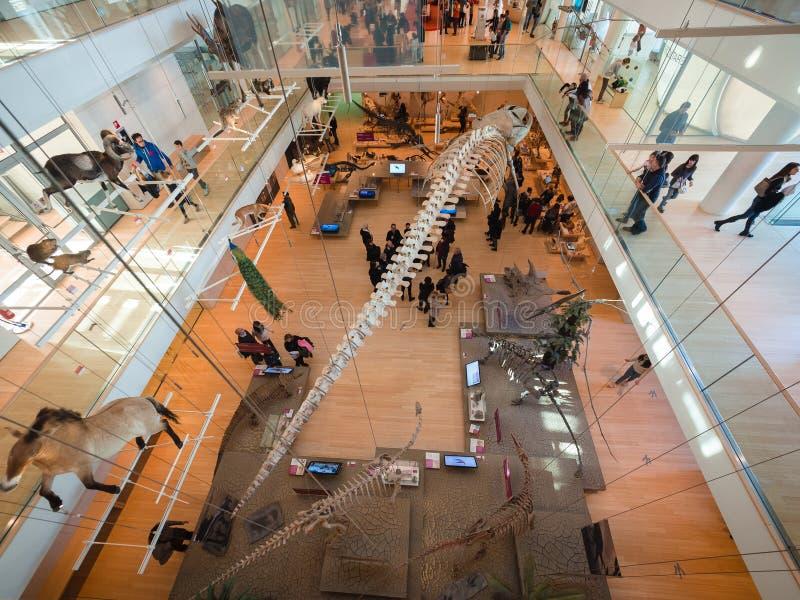El ` de la MUSA del ` es el museo de la ciencia en Trento diseñó por el arquitecto italiano Renzo Piano foto de archivo