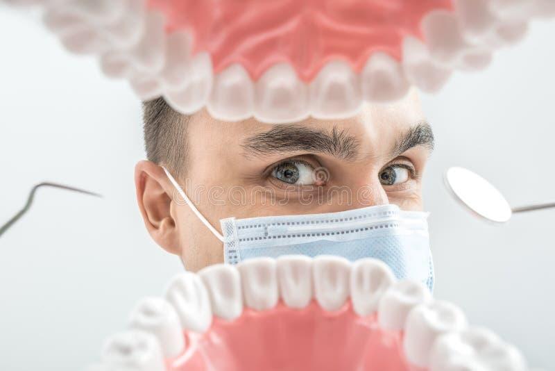 El dentista mira a través de modelo del mandíbula fotografía de archivo