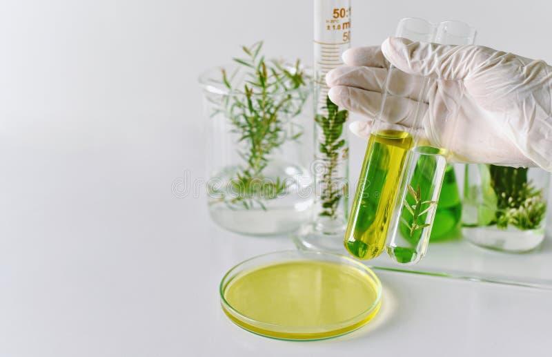 El desarrollo natural de la medicina en el laboratorio, científico investiga y herbario verde del experimento foto de archivo