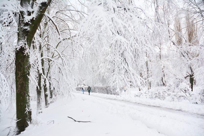 El descenso de la tormenta de la nieve 8 pulgadas de nieve en New York City fotos de archivo