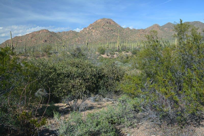 El desierto de Sonoran pasa por alto - el parque nacional de Saguaro fotografía de archivo