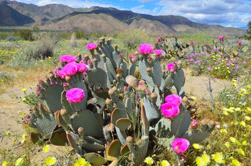 El desierto en la floración imagen de archivo libre de regalías
