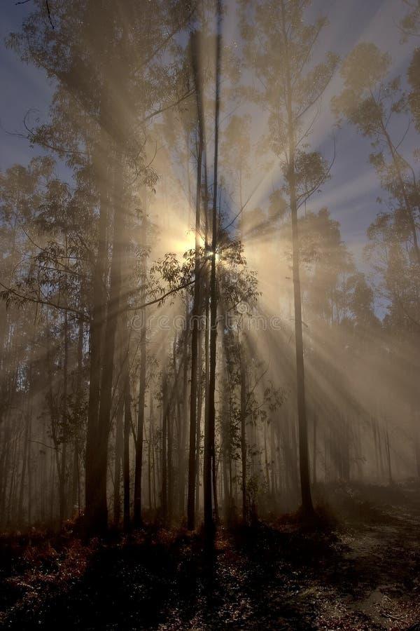 El despertar del día en el bosque imagen de archivo