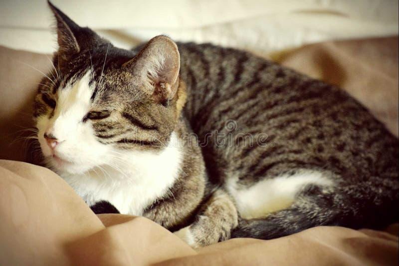 El despertar del gato imagen de archivo libre de regalías