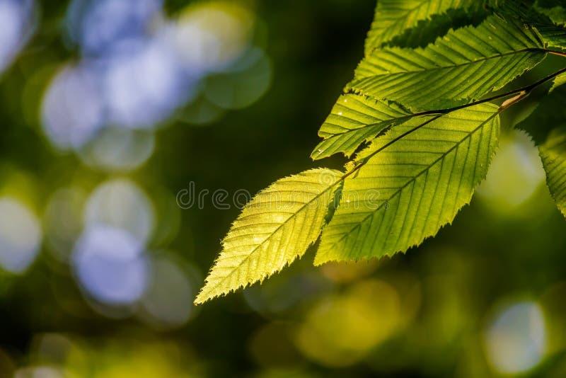 El detalle hermoso, armonioso del bosque, con el carpe se va imagen de archivo