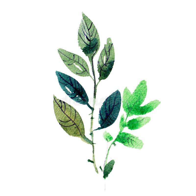 El dibujo de la acuarela del jardín fresco florece, pintura de la acuarela del ramo del prado del verano stock de ilustración