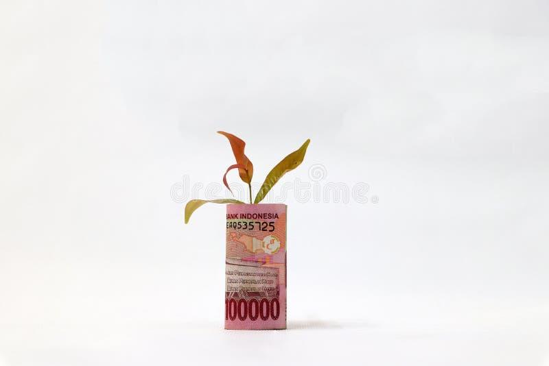El dinero rodado del billete de banco cientos mil rupias de Indonesia y pl?ntula crece con el fondo blanco imagen de archivo