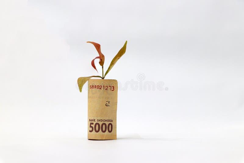 El dinero rodado del billete de banco cinco mil rupias de Indonesia y plántula crece con el fondo blanco fotografía de archivo