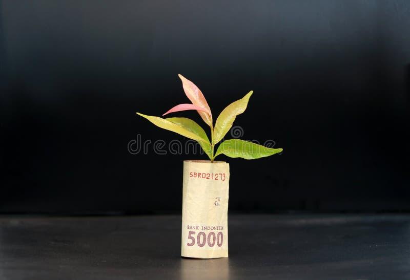 El dinero rodado del billete de banco cinco mil rupias de Indonesia y plántula crece con el fondo negro fotos de archivo libres de regalías