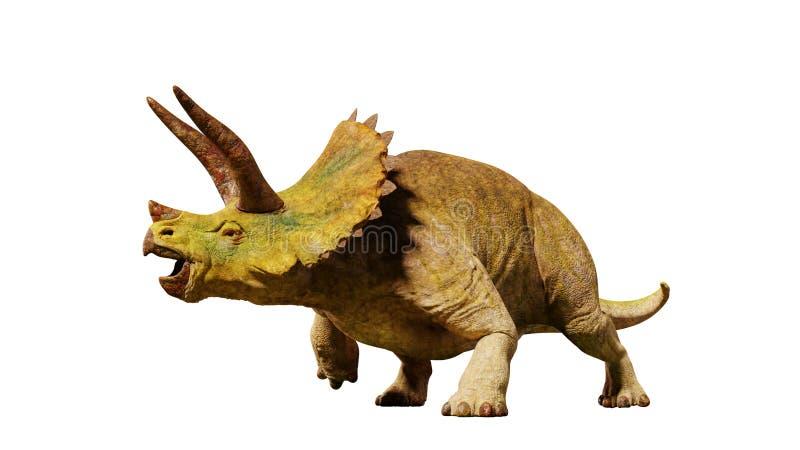 El dinosaurio del horridus del Triceratops a partir de la era jurásica 3d rinde aislado en el fondo blanco libre illustration