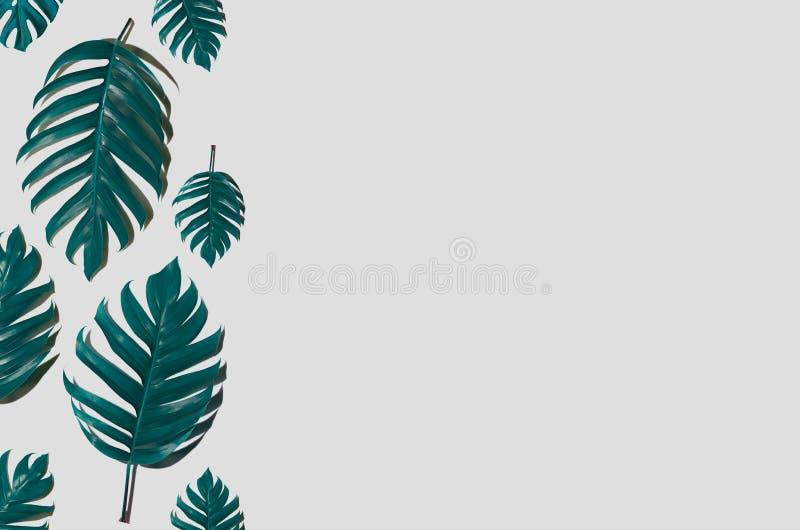El diseño mínimo del fondo del arte del concepto deja a monstruo tropical azul y se va en el verano de moda Leav tropical de la p foto de archivo