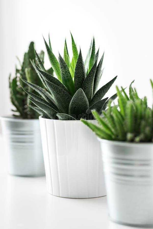 El diverso cactus y las plantas suculentas en diversos potes se cierran para arriba Decoración moderna del sitio Plantas de la ca imagenes de archivo
