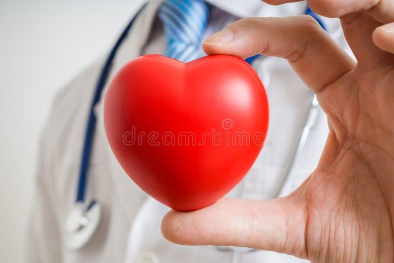 El doctor del cardiólogo está mostrando el corazón rojo fotos de archivo libres de regalías
