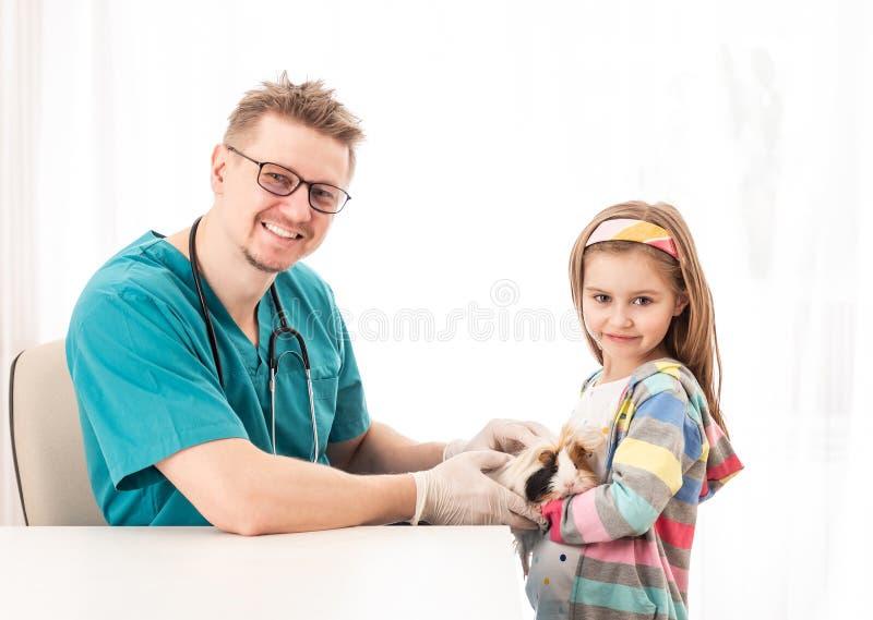 El doctor del veterinario examina el conejillo de Indias de las muchachas foto de archivo