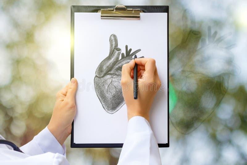 El doctor dibuja un bosquejo del corazón humano imágenes de archivo libres de regalías