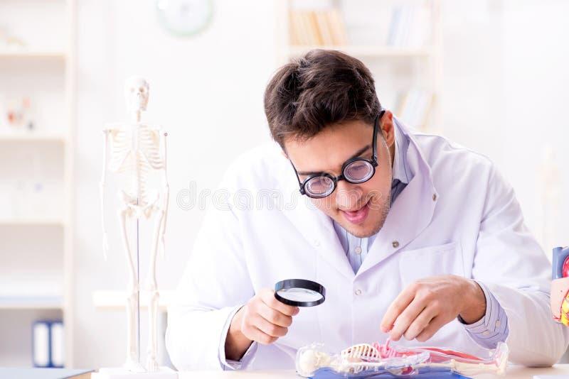 El doctor loco que estudia el esqueleto humano imagenes de archivo