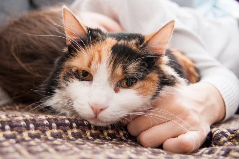 El dormir con el gato imágenes de archivo libres de regalías