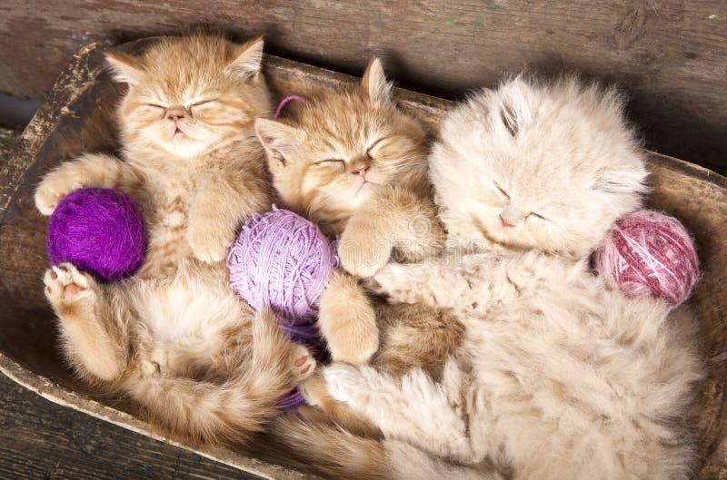 El dormir de los gatitos fotos de archivo
