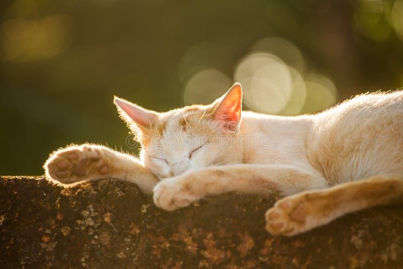 El dormir de mentira del gato perdido afuera imagen de archivo