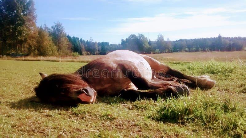 El dormir del caballo fotos de archivo