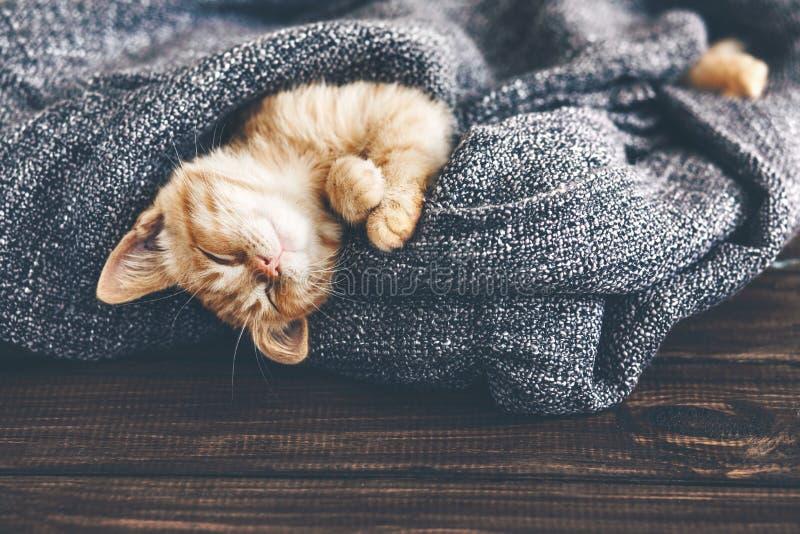 El dormir del gatito de Gigner foto de archivo libre de regalías
