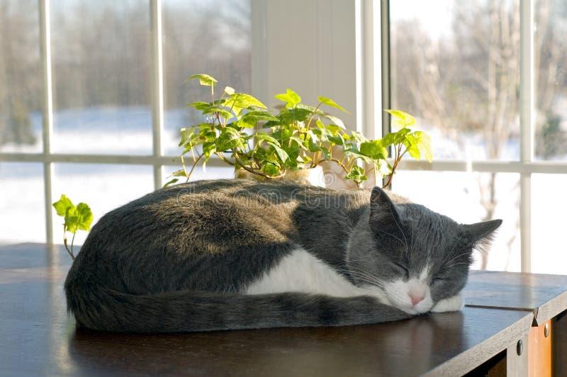 El dormir del gato imagenes de archivo