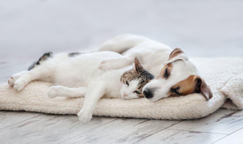 El dormir del gato y del perro fotografía de archivo